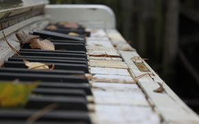 photo, Keys, piano, old, broken, leaves, autumn, macro, musical instrument