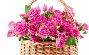 розы, розовые, цветы, красивые, букет, корзина, корзинка