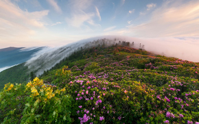 上午, 山, 雾, 花卉, 草