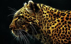 cat, fiery, leopard