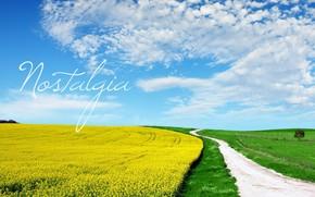 champ, route, jaune, lgumes verts, ciel