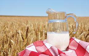 молоко, кувшин, полотенце, пшеница, колосья