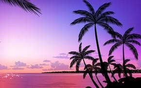 пальмы, вектор, вечер