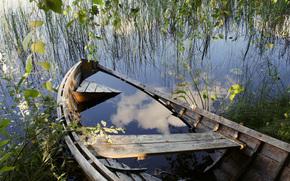 acqua, stagno, lago, erba, albero, ramo, barca, scheletro