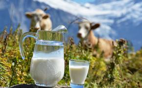 кувшин, стакан, молоко, коровы, горы