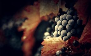 uvas, roco, deja