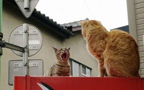 город, коты, двое, соперничество