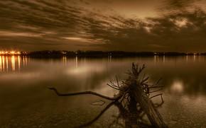 root, river, evening, Lights