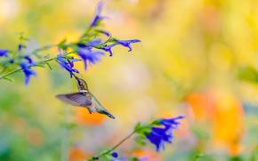 птичка, колибри, цветы, яркий, фон