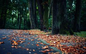 природа, парк, асфальт, листва, деревья, осень
