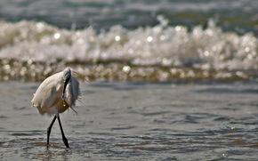 bird, stork, coast, sea