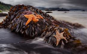 Algae, starfish, water, stones, macro