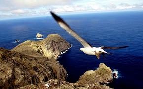landscape, nature, seagull, island, galapagos, ecuador, blue, sea, landscape, nature, seagull, Island, The Galapagos Islands, Ecuador, blue, Marine