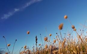 sky, field, Life