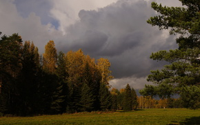 petersburg, forest, Pavlovsk, nature, storm