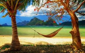 caraibico, paradiso, Luce del sole, Mare, Spiaggia, amaca, palme, relax