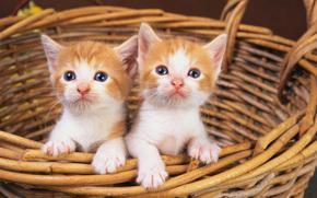 кот, кошка, корзина, двое, котята, рыжий, белый