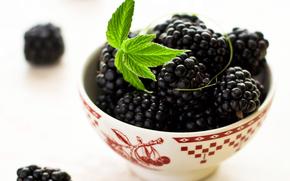 piala, Berries, black, blackberry, macro