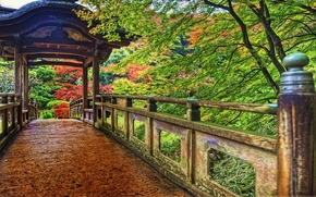 yokohama, japan, park, colorful, vegetation, wooden, bridge, Yokohama, Japan, park, Colorful, vegetation, wood, bridge