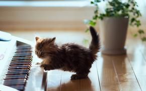 cat, synthesizer