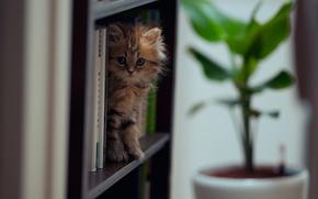 gatto, libri