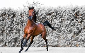 horse, run, beauty, grace