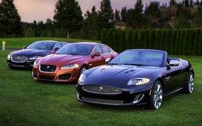 jaguar, IksKey, iksef, IksDzhey, frente, hierba, Los rboles, fondo, Jaguar