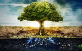 albero, elettricit, radici, cielo, terra