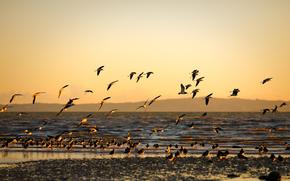 морской, берег, море, птицы, закат, золотой фон