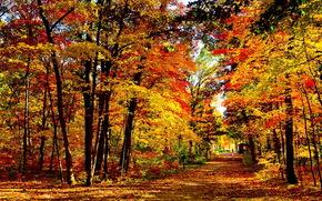 美国, 威斯康星州, 公园湖米尔斯