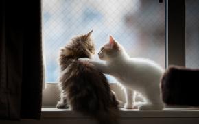 котята, няшки, пушистые, пара