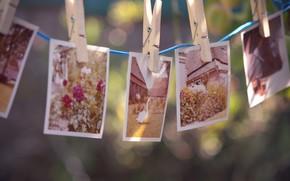 фотографии, прищепки, веревка, воспоминания, дом, цветы, гусь, птица