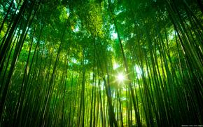 foresta, natura, paesaggio