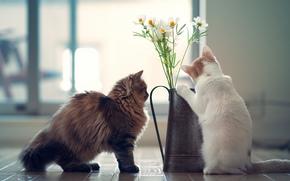 котята, цветы