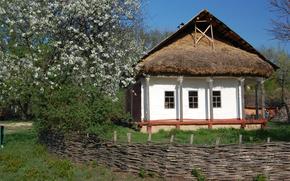 Ucraino, capanna, canniccio, mela