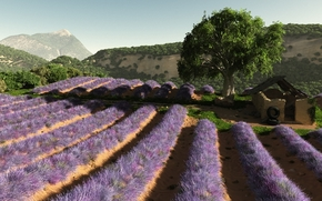 Arte, campo, Flores, Lavanda, prpura, construccin, rbol, Hills, serie