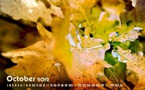 календарь, октябрь, месяц, числа, осень, листья, листва, желтый