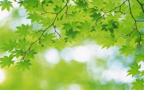 lista, folhetos, verde, vero