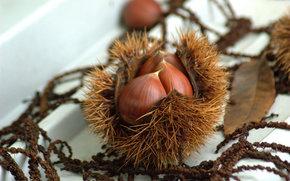 chestnuts, Nuts, autumn treat