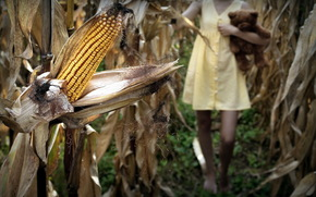 corn, girl, toy