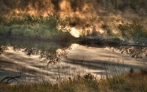 性质, 秋天, 灌木, 湖, 雾