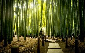 parque, carretera, bamb