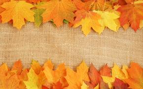 листья, яркие краски, прожилки, осень