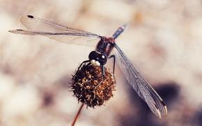 насекомые, макро, природа, стрекоза