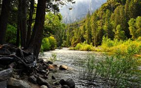 горы, скалы, лес, деревья, река, камни.