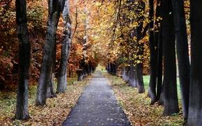 landscape, nature, autumn, Moscow