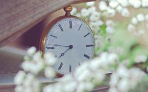 часы, карманные, книга, страницы, цветы, белые, мелкие, размытость, макро, гипсофила