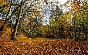 parco, natura, autunno, fogliame