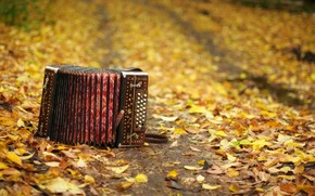 accordion, musical instrument, autumn, leaves