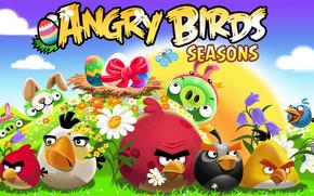uccelli arrabbiato, animali, campo, erba, cielo, nuvole